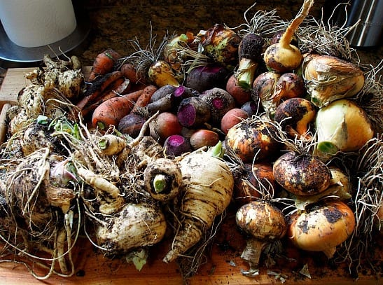 All the root veges ready for winter storage!