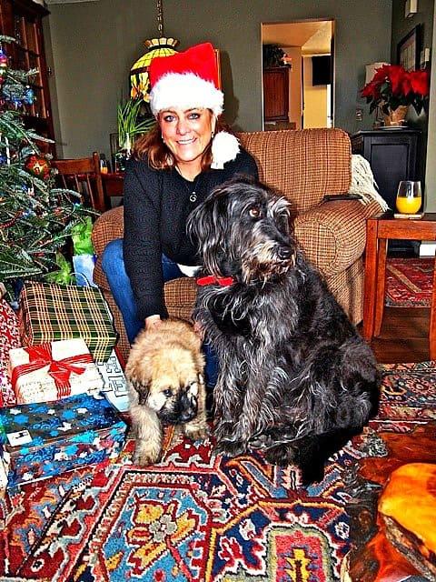 Big dog, little dog. Christmas dog love!
