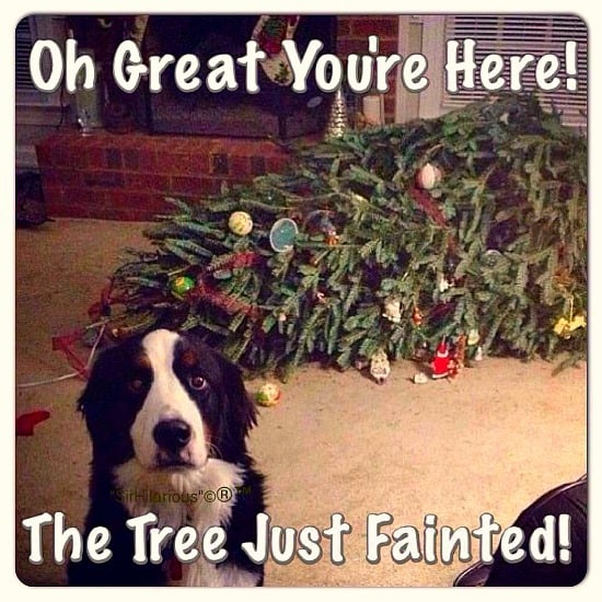 This was the same look my dog Charlie gave me when the tree came down!