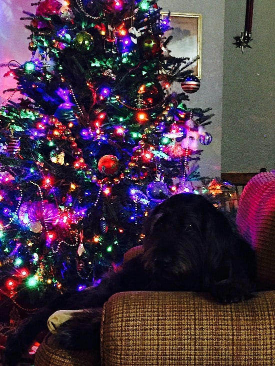 My dog Hans hanging out by the tree... before it came crashing down! He didn't even flinch.