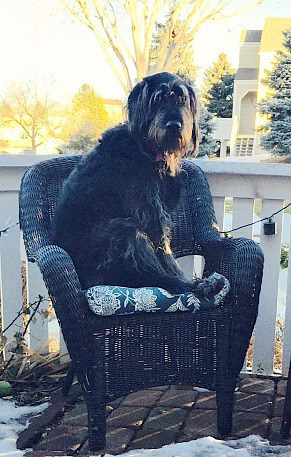 "This is Handsome Hans. He likes to ""guard"" the neighborhood sitting in his favorite chair. Cracks me up every time!"