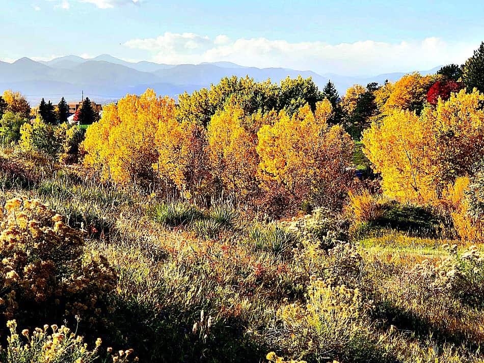 Northridge open space, Highlands Ranch, colorado