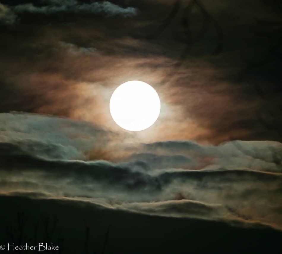 Wolf Super Moon
