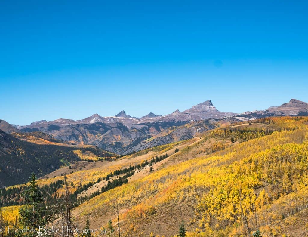 A picture of Uncompahgre Peak and colorful aspen trees