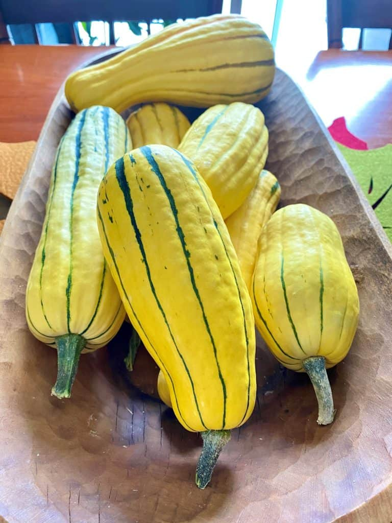 A picture of Delicata squash in a large wooden bowl.